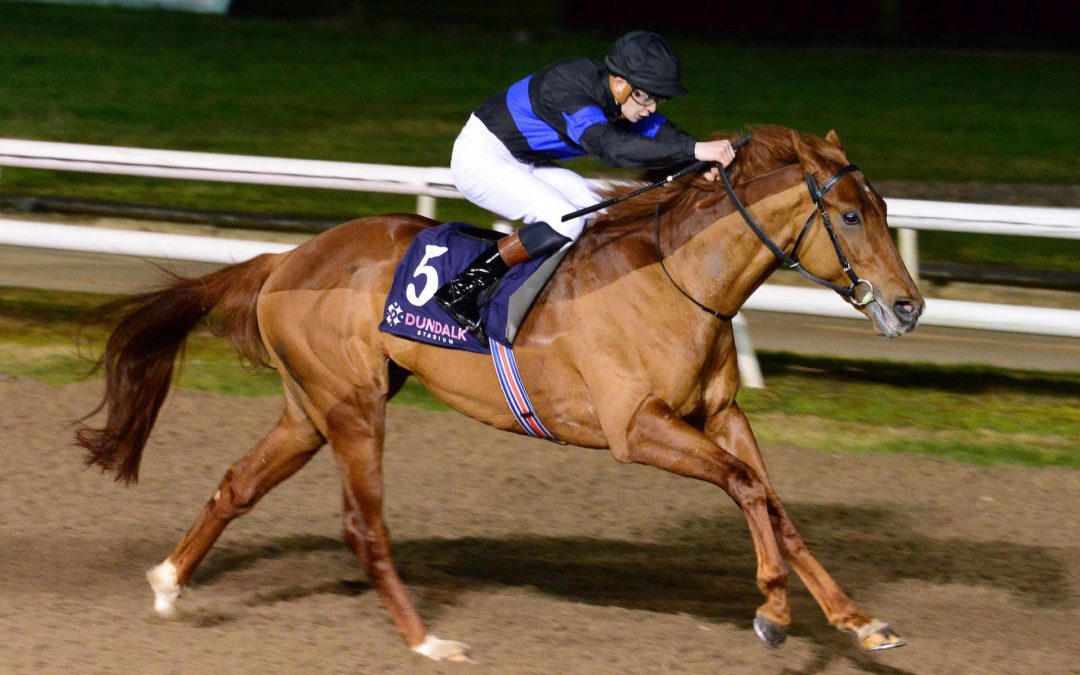 No Nay Never Colt Gains Deserved Maiden Win